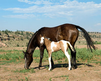 Mare and Foal - Wild Horses
